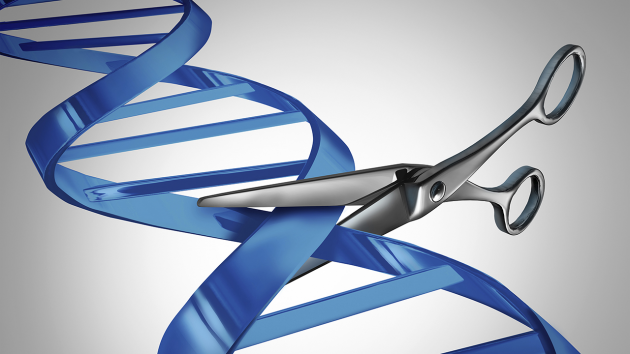 크리스퍼 유전자 가위 등 유전자 교정 기술은 최근 생명공학 연구에서 가장 뜨거운 주제다.   - 사이언스 제공